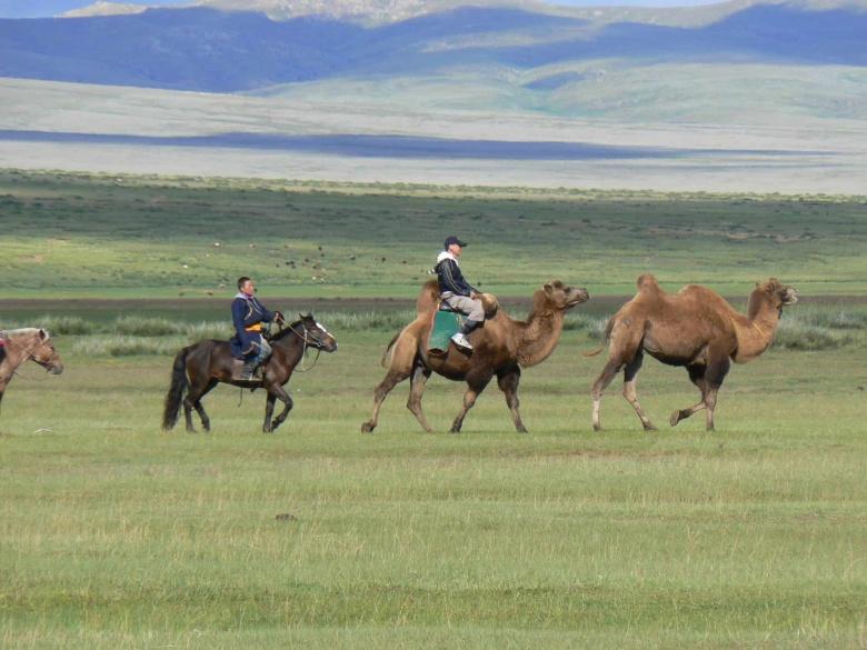 Etat des lieux de la situation en Mongolie depuis l'apparition du Coronavirus